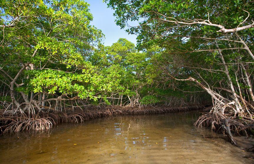fishing mangroves|snook-fishing-mangroves