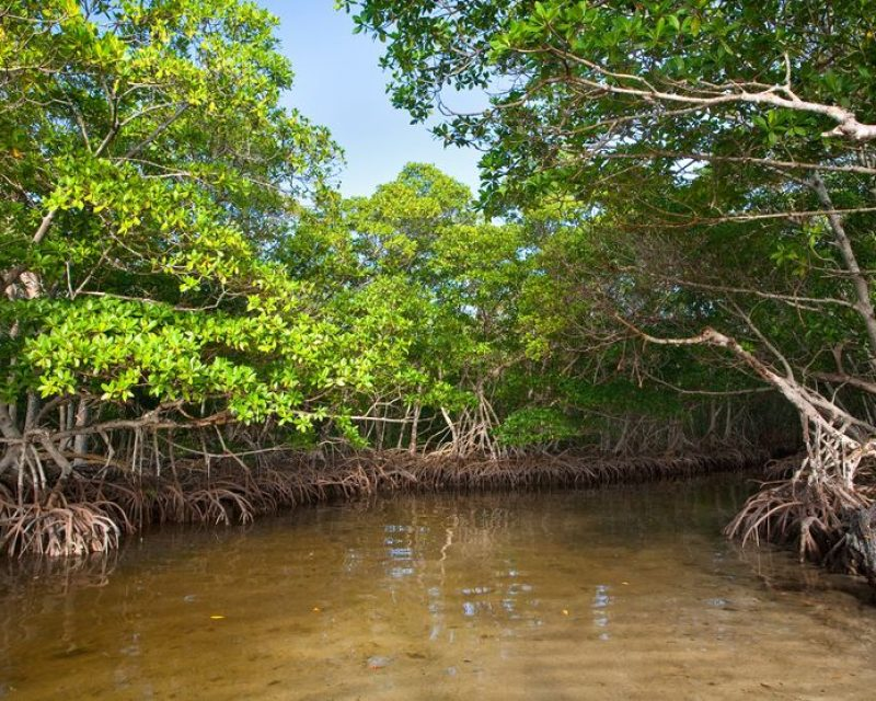 fishing mangroves|snook-fishing-mangroves